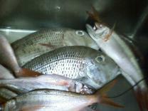 毎日名護漁港から 新鮮鮮魚が直送!!